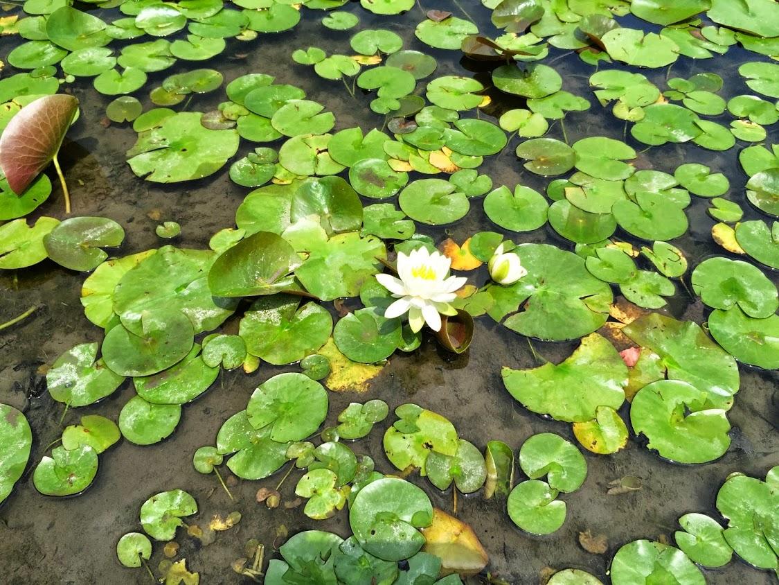 一起旅行 之 Innisfree Garden - abcxyz123.com